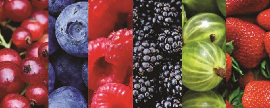 Ananos Organic Berries